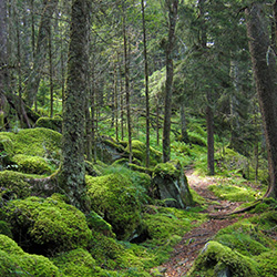 Formy ochrony przyrody Budzów