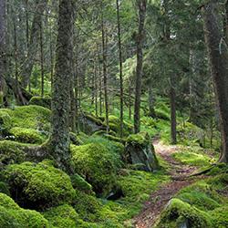 Formy ochrony przyrody Chojna
